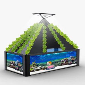 创建良性生态循环-鱼鸟共生系统